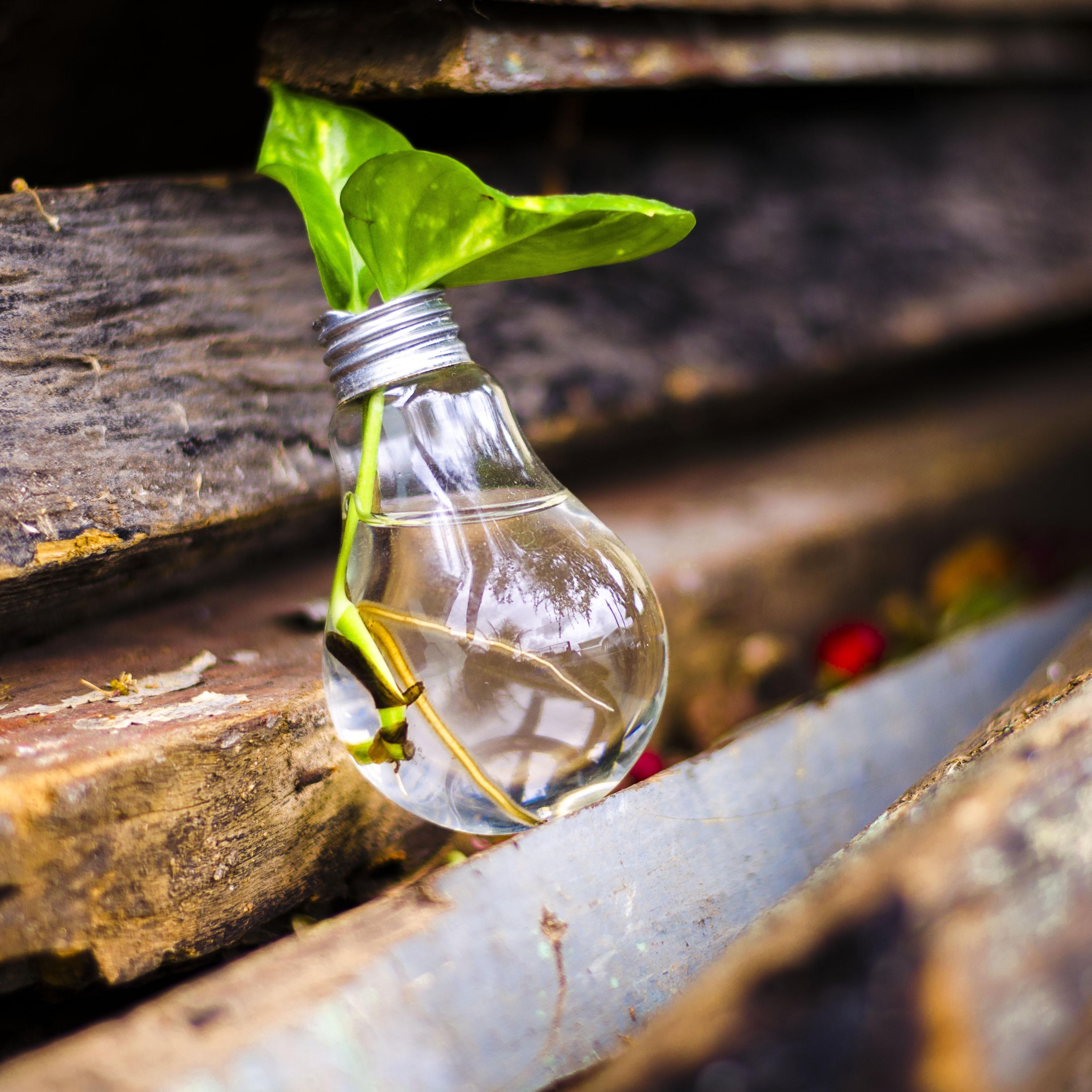 honda-sustainable-md
